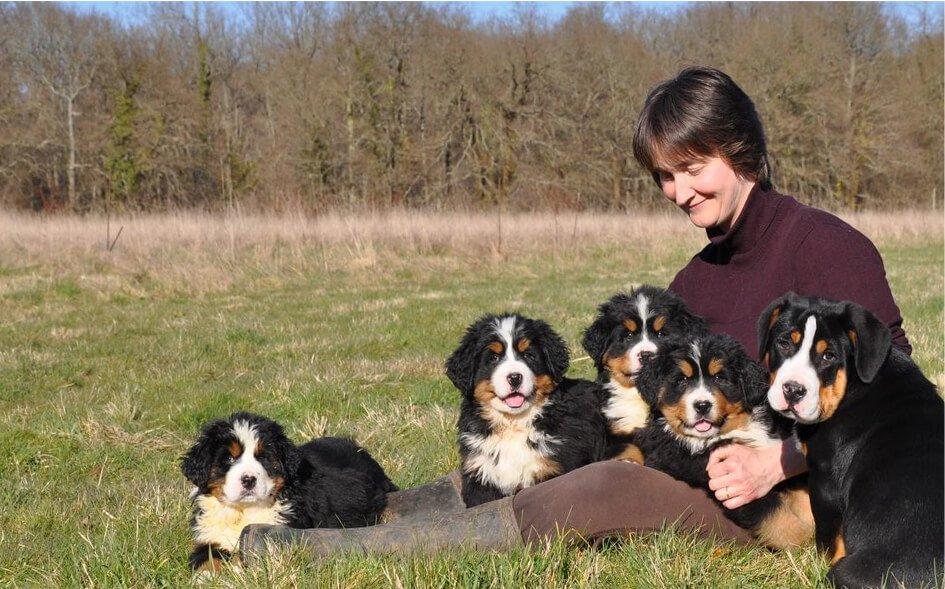Vente de Bouvier Bernois à l'élevage familialle des Joyeuses Gambades